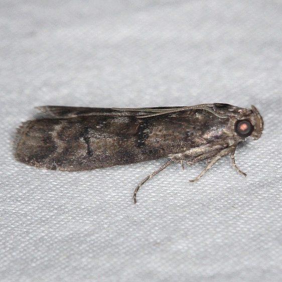 Unknown Collier-Seminole St Pk 3-5-15