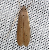 1422 Palm Skeletonizer Moth Collier Seminole St Pk 2-25-14