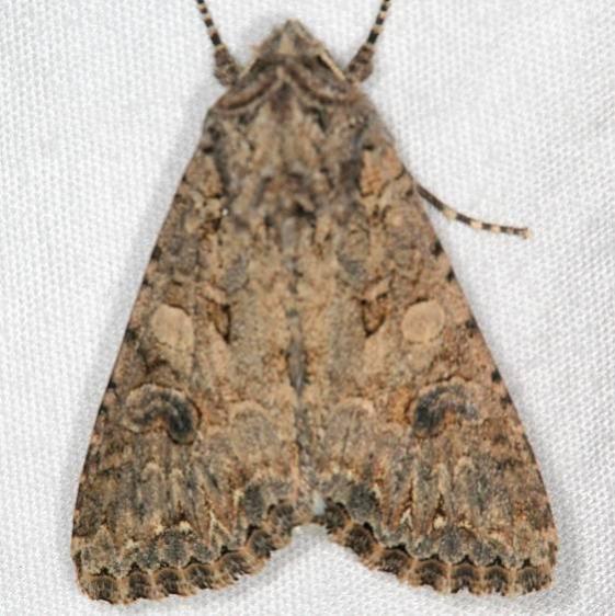 10223 Nutmeg Moth Moab RV Resort Moab Utah 6-5-17 (21)_opt