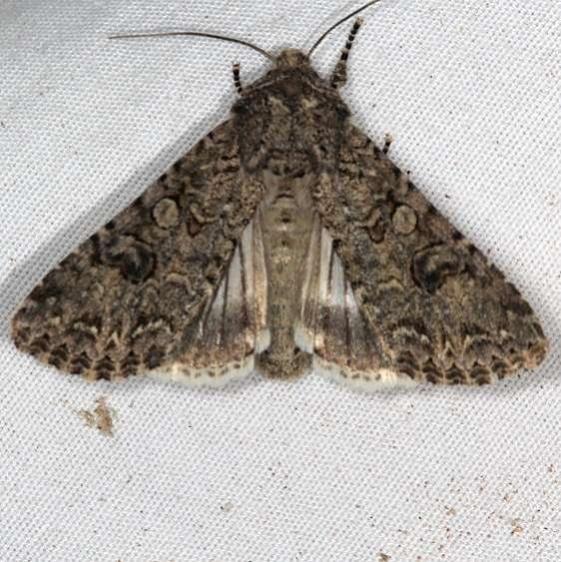 10223 Nutmeg Moth Moab RV Resort Moab Utah 6-5-17 (25)_opt