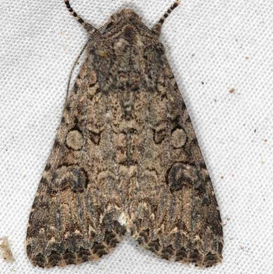 10223 Nutmeg Moth Moab RV Resort Moab Utah 6-5-17 (26)_opt