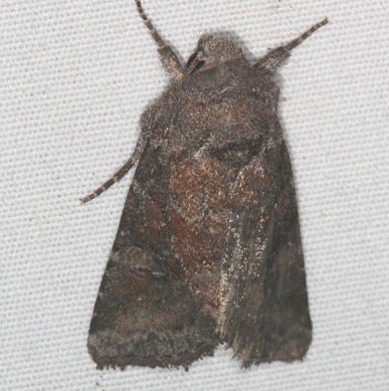 10368 Thinker Moth yard 9-8-15