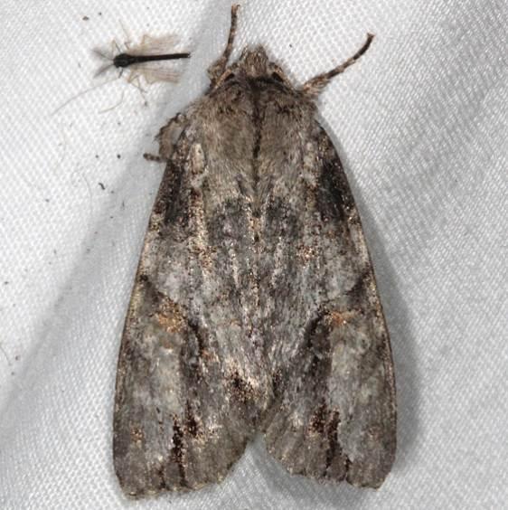 10921 Fluid Arches Moth Thunder Lake UP Micha 6-24-15 (16)_opt