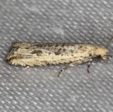 2707 Javelin Moth yard 7-30-13