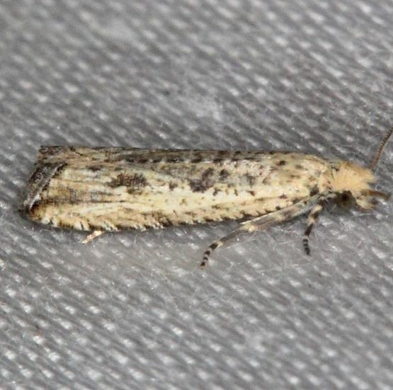 2707 Javelin Moth yard 7-30-13