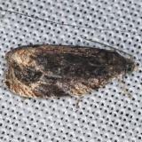 2859.97 Unidentified1 Olethruetine Moth BG Lake of the Woods Ontario BG 7-26-16 (3)_opt