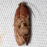 3494 Filbertworm Moth Leslie Angel's house Tenn 8-24-12