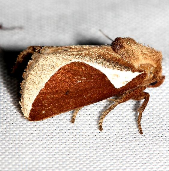 4671 Skiff Moth Lake Kissimmee St Pk Fl 2-26-13