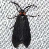 4629 Clemens' False Skeletonizer Moth Copperhead firetower Shawnee St Pk 8-6-16 (154a)_opt