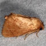 4653 Red-crossed Button Slug Moth Burr Oak St Pk at lodge Oh 6-28-14