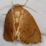 4654 Abbreviated Button Slug Moth Copperhead firetower Shawnee St Pk 8-6-16 (9a)_opt
