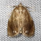 4659 Jeweled Tailed Slug Moth Thunder Lake Mich UP 6-24-13