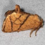 4667 Yellow-collared Slug Moth Copperhead Firetower Shawnee St Forest 6-13-15