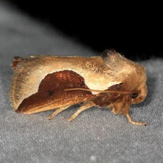 4671 Skiff Moth yard 7-14-13