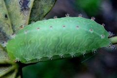 4679 Nason's Slug Adams Co Oh 9-12-09