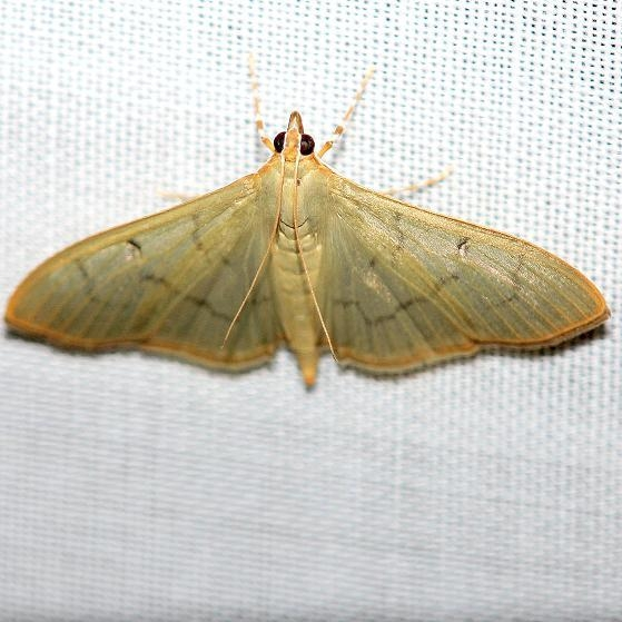 5215 The Alamo Moth Everglades Natl Pk Nike Missle Rd 3-7-13