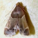 5510 Meal Moth yard 8-9-11 (1)_opt