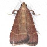 5566 Posturing Arta Moth yard 7-14-13