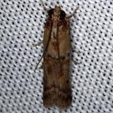 5734 Palm Bud Moth Kissimmee Prairie St Pk 2-17-14