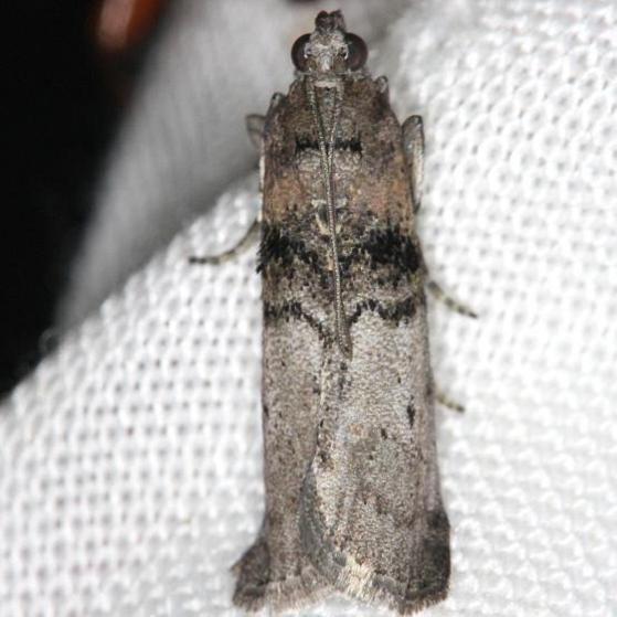 5808 Tlascala Moth yard 5-2-13