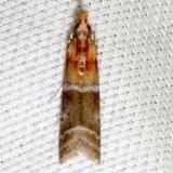 6005.1 Paler Moodna Moth Lake Kissimmee St Pk 3-1-13