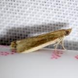 6028 Tampa Moth Everglade Natl Pk Nike Missle Rd 3-5-13