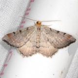 6340 Minor Angle Moth yard 8-6-13