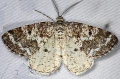 6638 Powder Moth Thunder Lake UP Mich 6-21-14