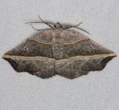 6820 Dark Metanema MothThunder Lake Up Mich 6-22-14