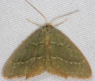7084 Pistachio Emerald Moth Thunder Lake UP Mich 6-23-14