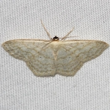 7164 Simple Wave Moth Thunder Lake UP Mich 6-23-12