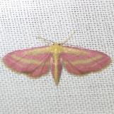 7177 Raspberry Wave Moth Everglade Natl Pk Nike Missle Rd 3-5-13
