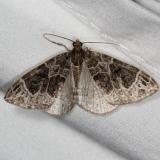 7213 Small Phoenix Moth Thunder Lake UP Mich 6-20-15 (65)