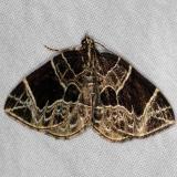 7214 Dark-banded Geometer Moth Burr Oak St Pk at cabins Oh 6-27-14
