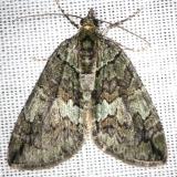 7237 Transfigured Hydriomena Moth Carter Cave St Pk Ky 4-23-13