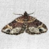 7388 Red Twinspot Moth yard 8-11-13