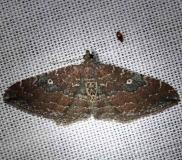 7414 The Gem Moth Kissimmee Prairie St Pk 3-12-13
