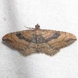 7414 The Gem Moth female yard 6-11-12