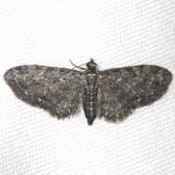 7488 Eupithecia tripunctaria yard 4-26-13