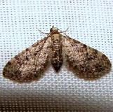 7609.97 Unidentified Eupithia Moth Kissimmee Lake St Pk 2-24-12