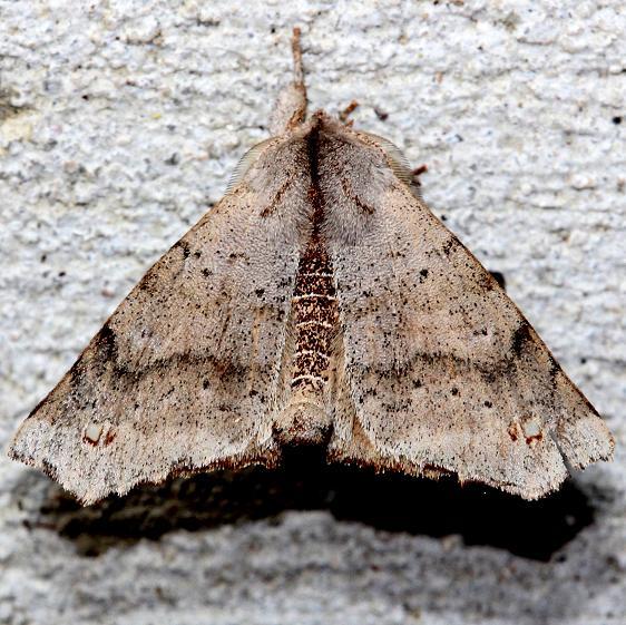 7665 Angel Moth Alexander Springs Ocala Natl Forest Fl 3-18-13