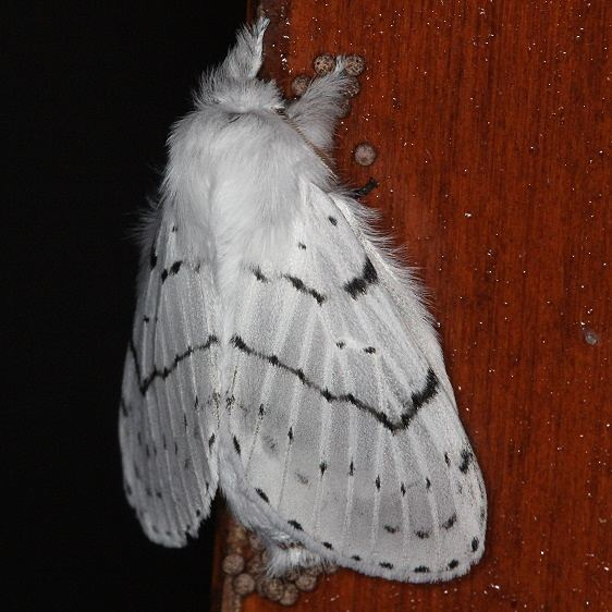 7683 Dot-lined White On Laundry Rm Door yard 10-14-13