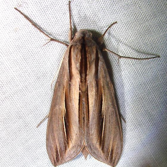 7840 Caicus Sphinx Nike missle Road junction Research Rd 2-28-12