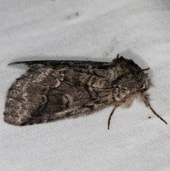 7999 Double-lined Prominent yard BG 7-4-16 (6a)_opt