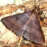 8380 Chocolate Renia Moth Leslie's House Tenn 8-25-12