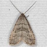 8421 Broken-line Hypenodes Moth yard 7-22-14