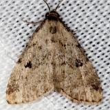 8427 Spot-edged Dyspyralis Shawnee St Pk Oh 6-14-13