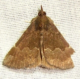 8448 Sordid Bomolacha Moth Jenny Wiley Ky 4-26-12