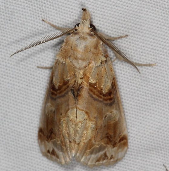 8534 Moonseed Moth Campsite 119 Falcon St Pk 10-22-16_opt