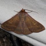 8587 Red-lined Panopoda Moth Silver Lake Cypress Glenn Fl 3-19-15